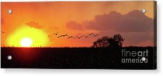 Sunset Over Easy Acrylic Print by Sue Stefanowicz