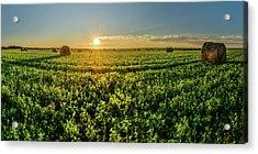 Sunset Over Prince Edward Island Clover Acrylic Print