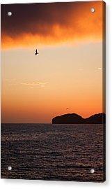 Sunset Over Sea Of Cortez Acrylic Print by Dina Calvarese