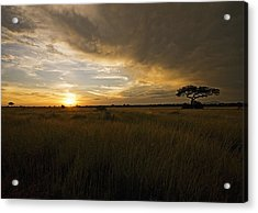sunset over the Serengeti plains Acrylic Print
