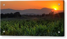 Sunset Over The Vineyard Acrylic Print by Peter Tellone