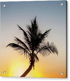 Acrylic Print featuring the photograph Sunset Palm by Az Jackson