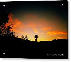 Sunset - Palm Mountain Acrylic Print by Guy Hoffman