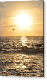 Sunset Pelican Silhouette Acrylic Print