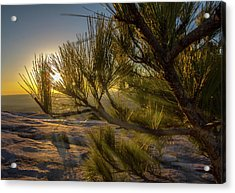 Sunset Pines Acrylic Print