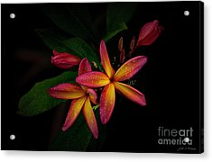 Sunset Plumerias In Bloom #2 Acrylic Print