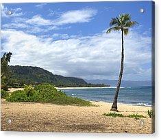 Sunset Point Palm Tree Acrylic Print by Paul Topp