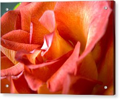 Sunset Rose One Acrylic Print by Abigail Markov