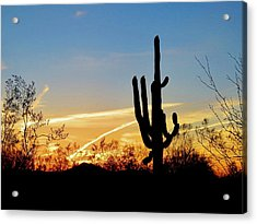 Sunset Saguaro In The Spring Acrylic Print