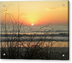 Sunset Sea Grass Acrylic Print by Sean Allen