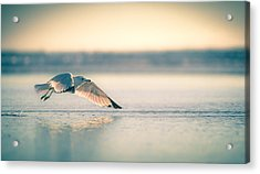 Acrylic Print featuring the photograph Sunset Seagull Takeoffs by T Brian Jones