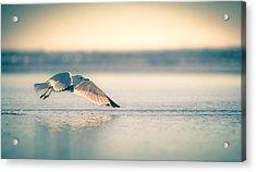 Sunset Seagull Takeoffs Acrylic Print