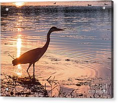 Acrylic Print featuring the photograph Sunset Sentinel by Paul Farnfield