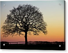 Acrylic Print featuring the photograph Sunset Silhouette by Clare Bambers