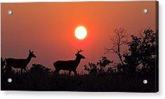 Sunset Silhouette Acrylic Print by David Dehner