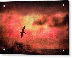 Sunset Soaring II Acrylic Print