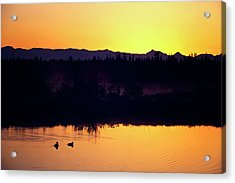 Acrylic Print featuring the photograph Sunset Swim by Sue Collura