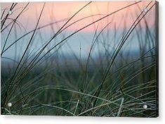 Sunset  Through The Marsh Grass Acrylic Print