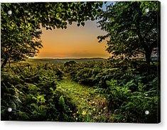 Sunset Through Trees Acrylic Print