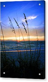 Sunset Thru The Sea Oats At Delnor Wiggins Acrylic Print