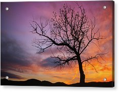 Acrylic Print featuring the photograph Sunset Tree by Darren White