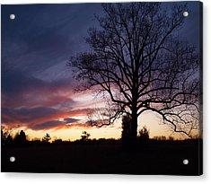 Sunset Tree Acrylic Print by Michael Edwards