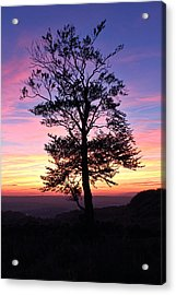 Sunset Tree Acrylic Print by RKAB Works