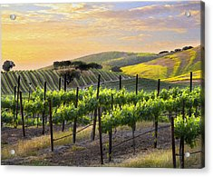 Sunset Vineyard Acrylic Print by Sharon Foster