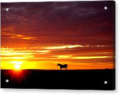 Sunset Watcher Acrylic Print