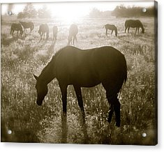 Sunset With Band Of Horses Acrylic Print by Kate Purdy