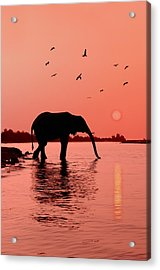 Sunset With Elephant Acrylic Print by Christian Heeb