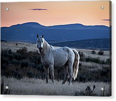 Sunset With Wild Stallion Tripod In Sand Wash Basin Acrylic Print