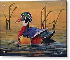 Sunset Wood Duck Acrylic Print