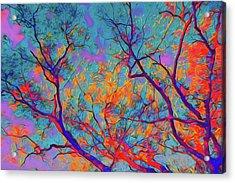 Sunsets Embrace Acrylic Print