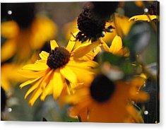 Sunshine And Daisies Acrylic Print by Trudi Southerland