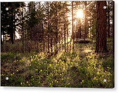 Sunshine And Lupine Acrylic Print by Mary Lee Dereske