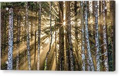 Acrylic Print featuring the photograph Sunshine Forest by Pierre Leclerc Photography