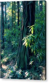 Sunshine In The Forest Acrylic Print