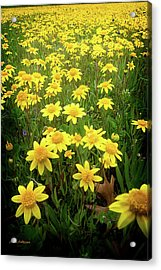 Sunshine Makes Me Happy Acrylic Print by Mick Anderson