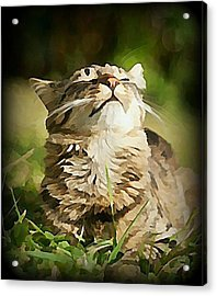 Sunshine Purrfection Acrylic Print
