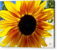 Sunshine Sunflower Acrylic Print