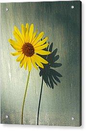 Sunshine Through The Grey Acrylic Print by Trinket's Legacy