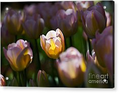 Acrylic Print featuring the photograph Sunshine Tulips by Angela DeFrias