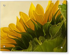 Sunshine Under The Petals Acrylic Print