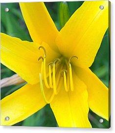 #sunshine #yellow #lily To Make You Acrylic Print