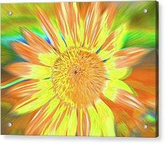 Sunsoaring Acrylic Print