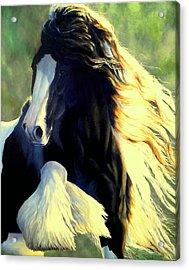 Sunstruck Vanner Acrylic Print