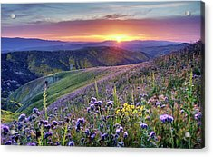Acrylic Print featuring the photograph Super Bloom In California Desert by Peter Thoeny