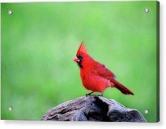 Super Red Acrylic Print by Dan Friend