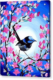 Superb Fairy Wren Acrylic Print by Cathy Jacobs